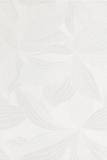 orchidea-bianco-25x37